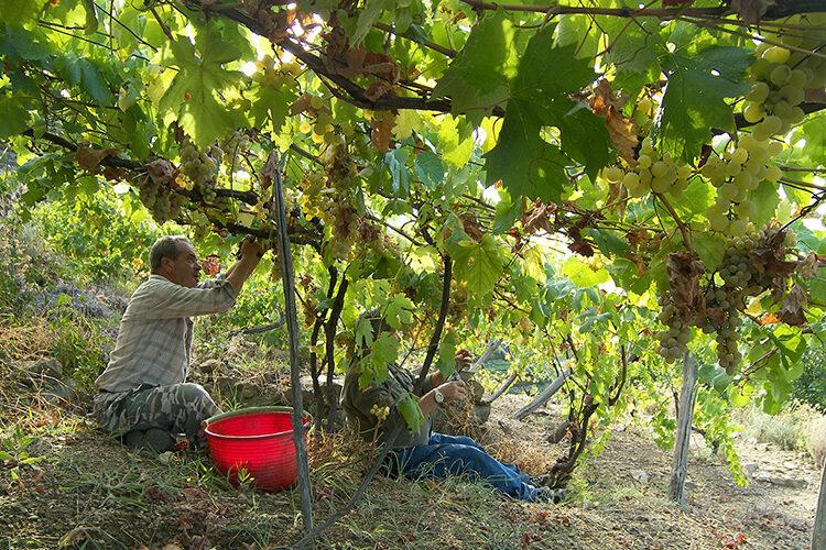 wine shore excursion from portofino santa margherita