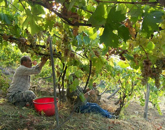wine tour shore excursion from genoa
