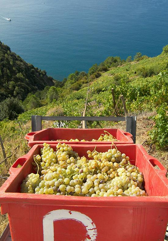 cinque terre private wine tours