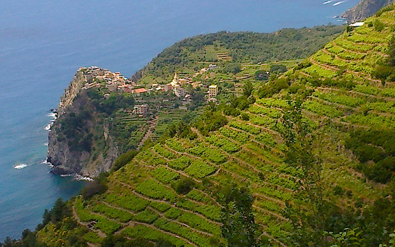 cinque terre from florence and tuscany, corniglia