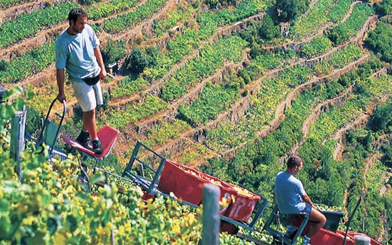 cinque terre wine tours